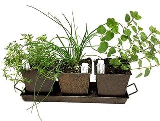Herb Garden Starter Kit.jpg