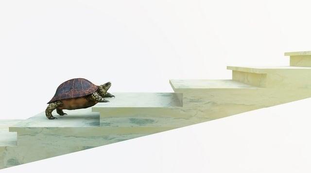 Turtle steps254.jpg