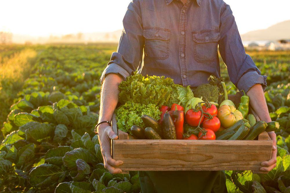tnFarm CSA Vegetable